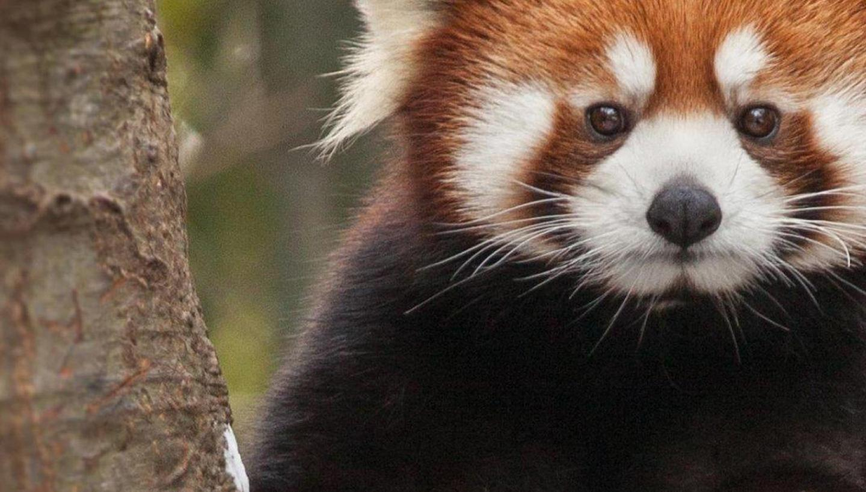 September Charity – Nashville Zoo Mount Juliet